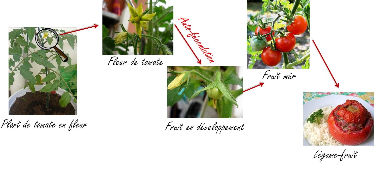 tomates fruit ou legume homeezy. Black Bedroom Furniture Sets. Home Design Ideas