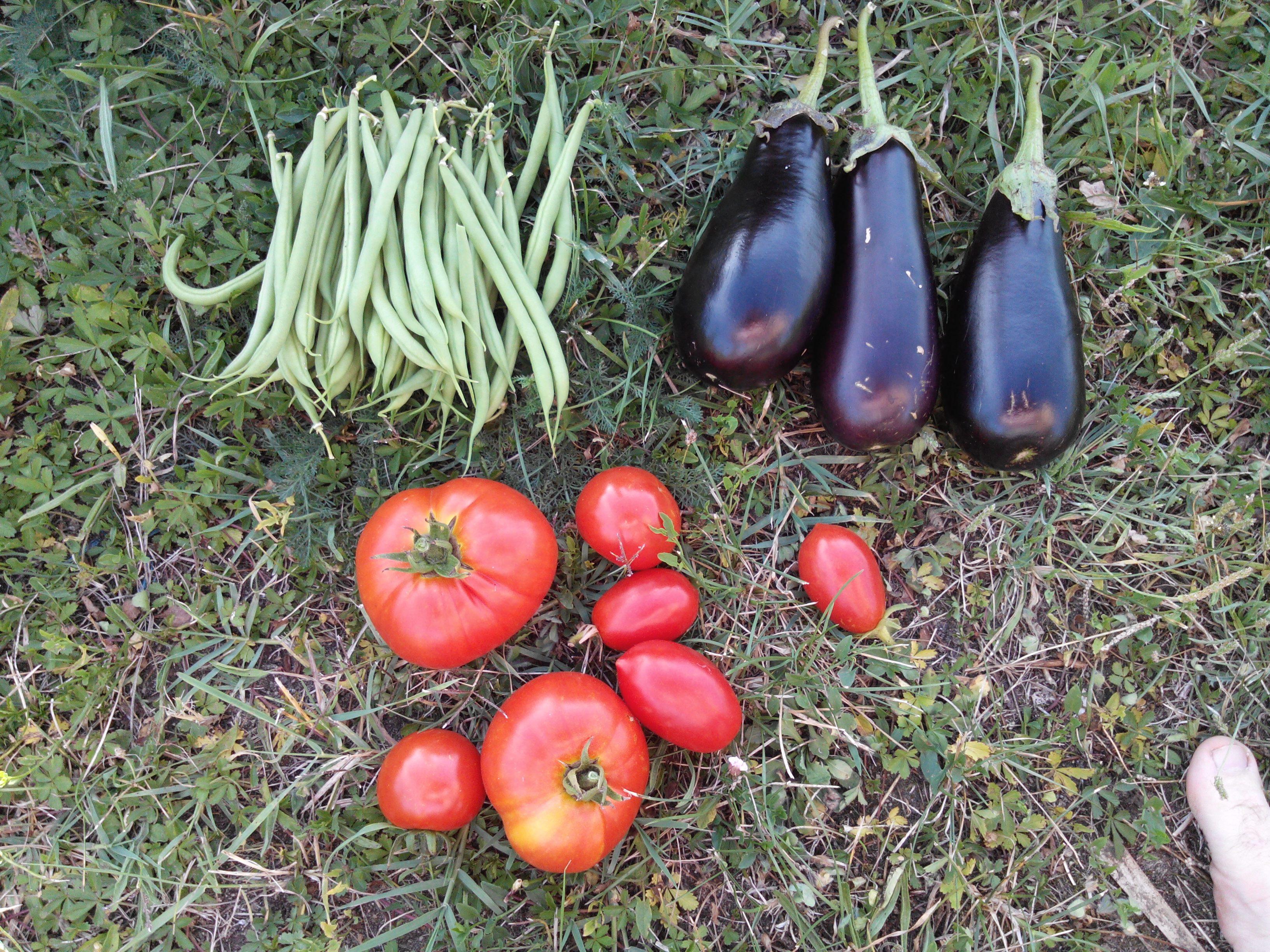 La rentrée 2014 des jardiniers du kolkhoze